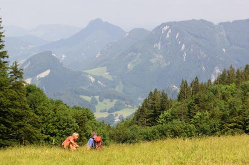 WandernimNationalparkKalkalpen©OÖT/Erber