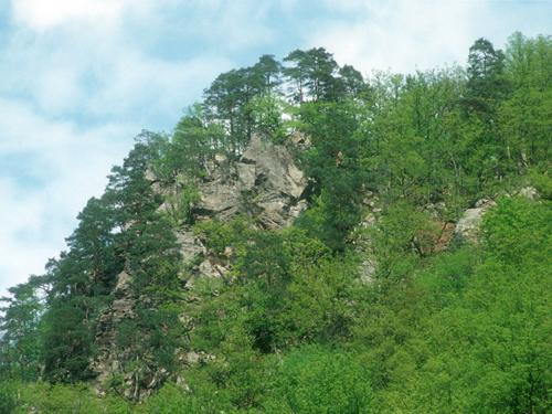 DonauhangwaldanderSchlögenerSchlinge©F.J.Limberger