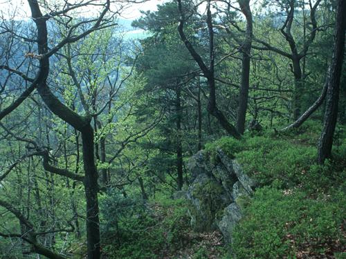 Donauhangwald©F.J.Limberger
