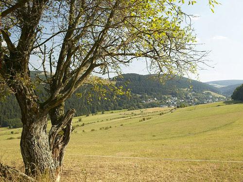 DieRegionSauerland©BergwanderparkSauerland